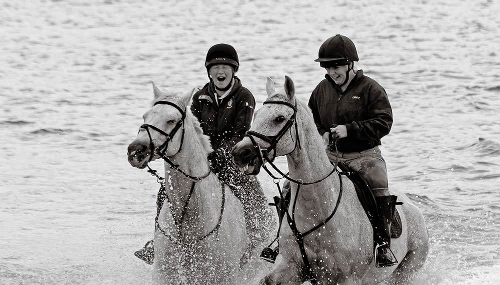 Horses and Seal Weymouth