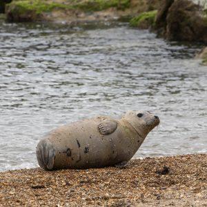 Sammy the Seal on Weymouth Beach