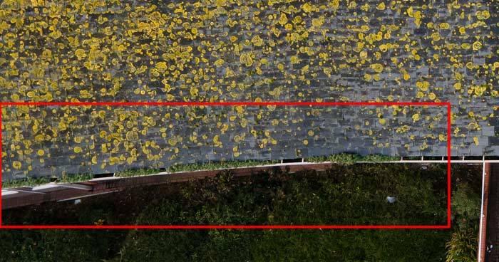 Gutter Inspection - Vegetation Growth in Roof Guttering